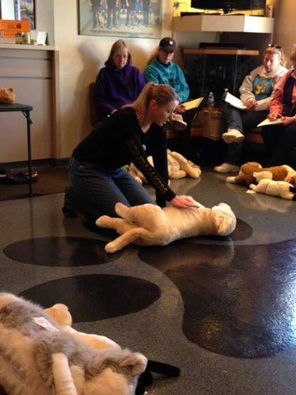 Vale Park Animal Hospital to Hold Pet CPR Course