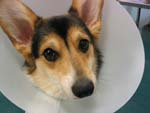 Vale Park Animal Hospital has the Answer for Ticks in 2014