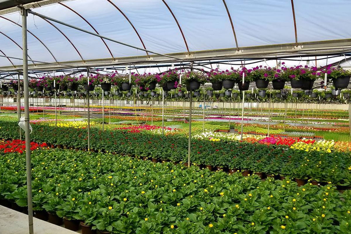 Blooms Greenhouse Grower Outlet prepares for spring rush