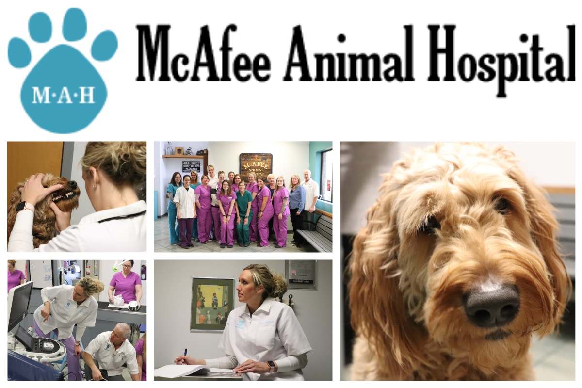 A Day in the Life of a Veterinarian at McAfee Animal Hospital