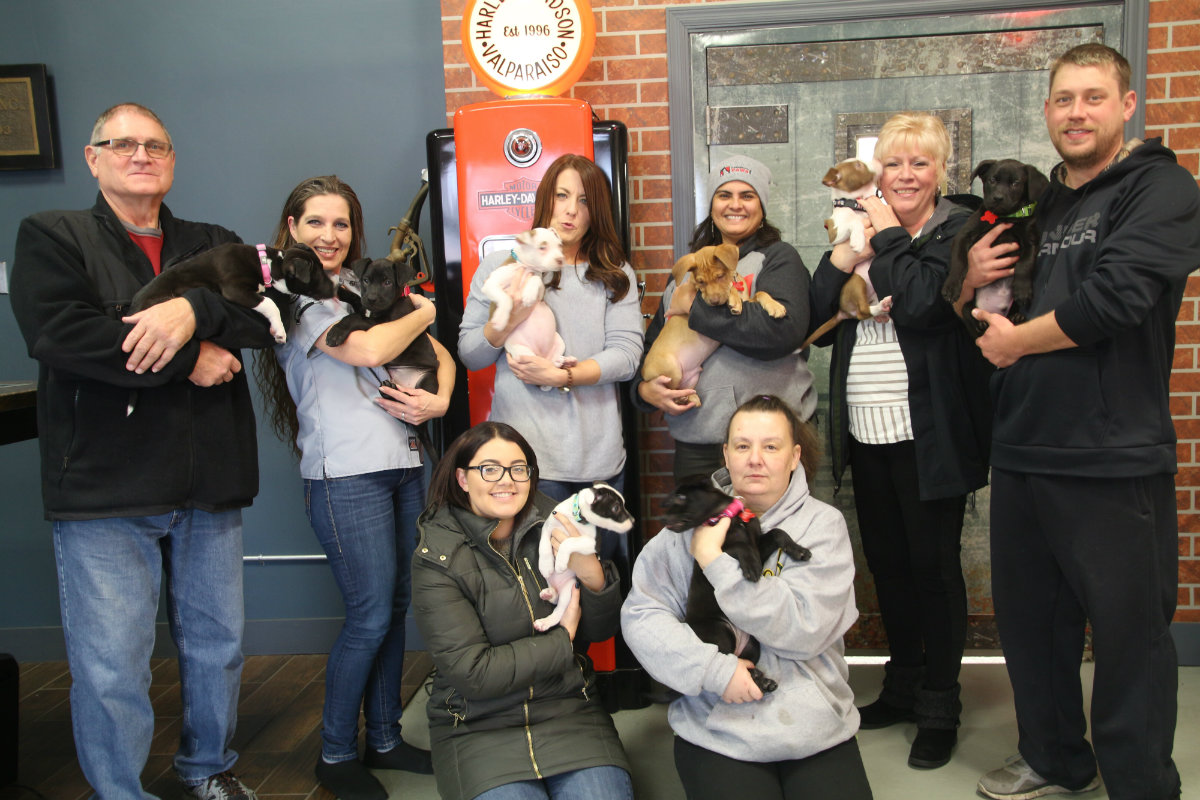 Lakeshore PAWS Rescued Litter Adopted Out in Time for Christmas