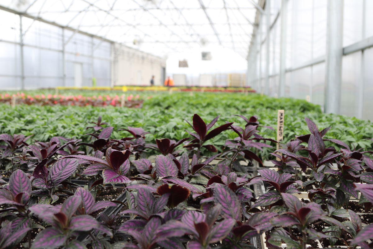 Valpo Parks Celebrates Their New Clifford Property Horticulture Complex